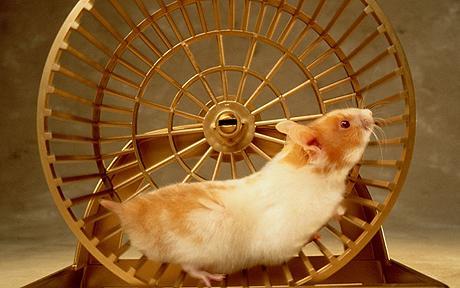 http://antifonitis.gr/online/wp-content/uploads/2016/05/hamster_1240313c.jpg